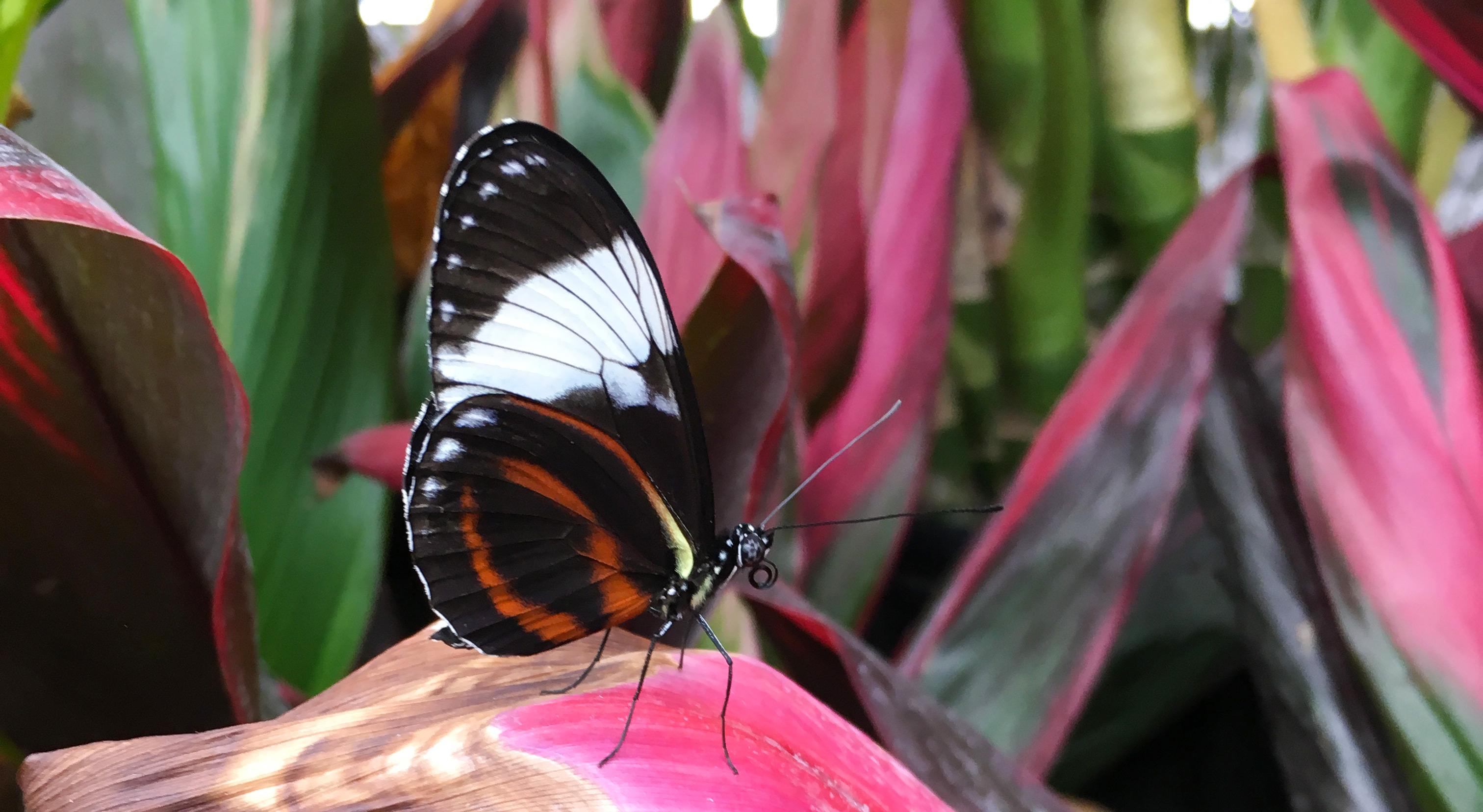 Gagne ton laisser passez famille pour papillons en f te for Jardin hamel papillon 2016