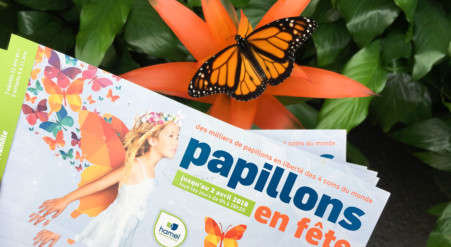 Concours archives sparks and bloom for Jardin hamel papillon 2016
