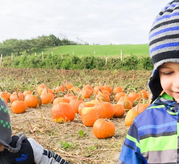18--jeudi--octobre-(LIFESTYLE)-que-faire-pour-l'halloween---StéphanieBrière