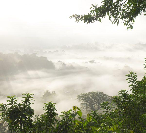 16 - mardi - juin (VOYAGE) 24 heures dans la forêt amazonienne-lever du jour